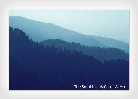 carol-weeks-01ed